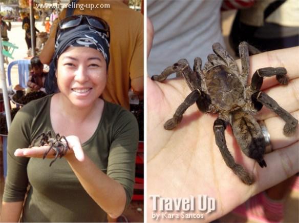 live spider siem reap cambodia