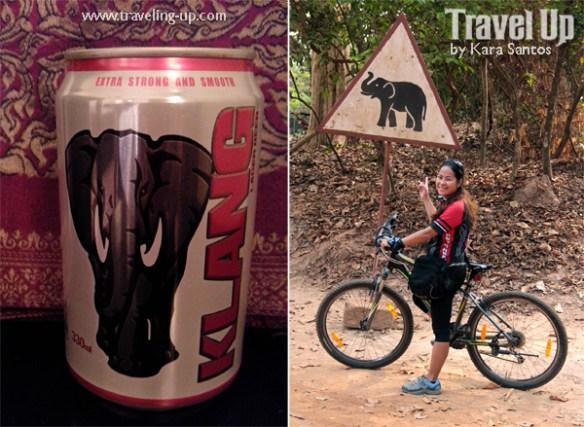 klang beer cambodia elephant