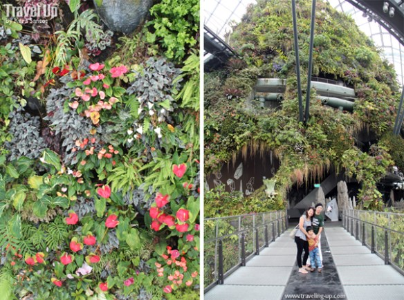 gardens by the bay cloud forest 09