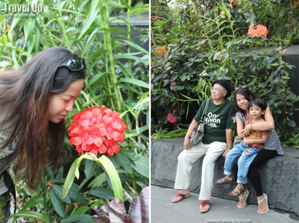 gardens by the bay cloud forest 11
