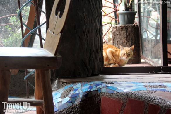baguio ililikha artist village 09 cat