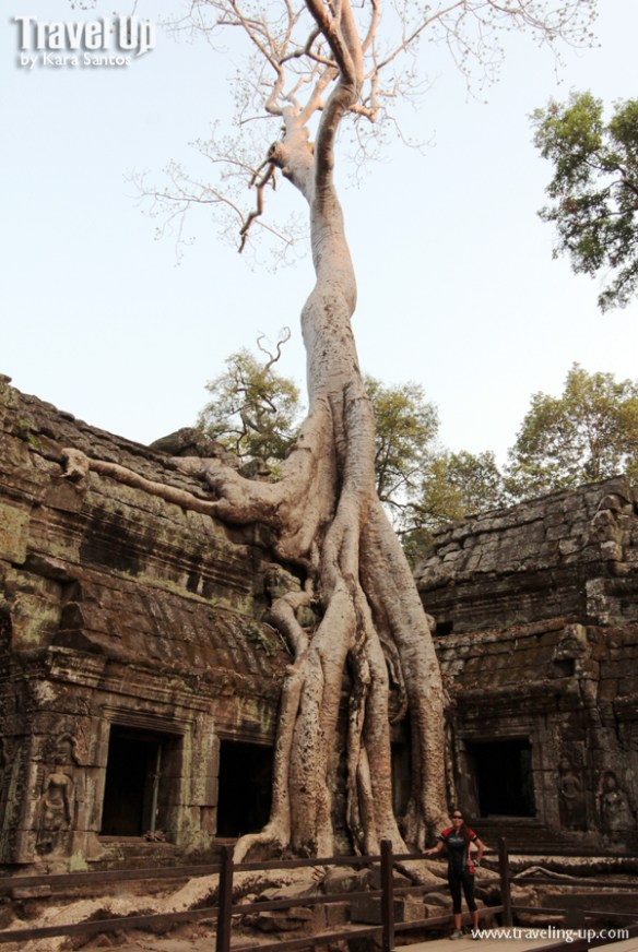 biking cambodia angkor archaelogical park ta prohm tree door