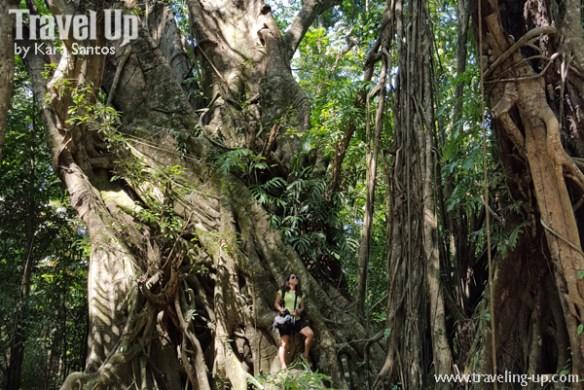 mapawa nature park cagayan de oro travelup tree