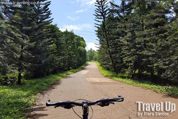 timberland roxas loop pine trees biking