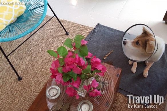 stay at the plant bistro tagaytay dog flowers