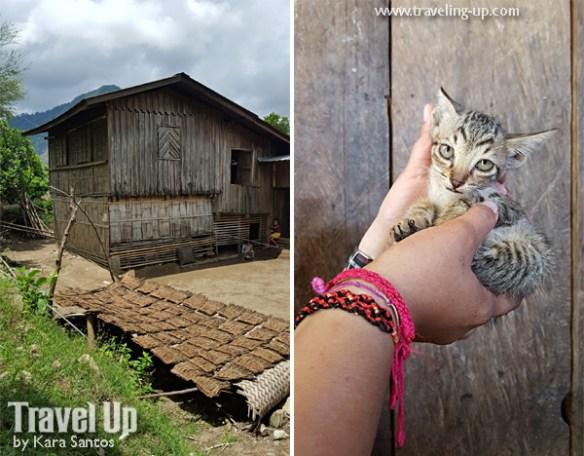 11. gen fullon san remigio antique house kitten