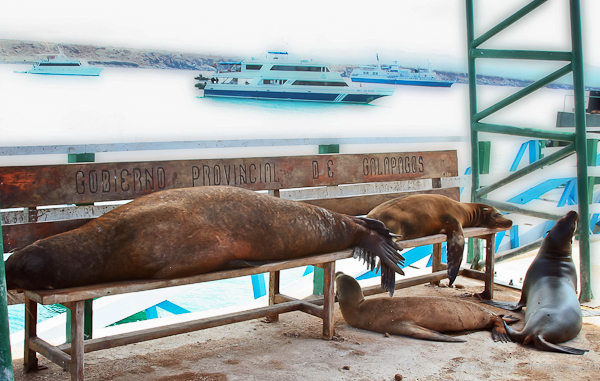 Sea lions at dock in Baltra, Galapagos Islands