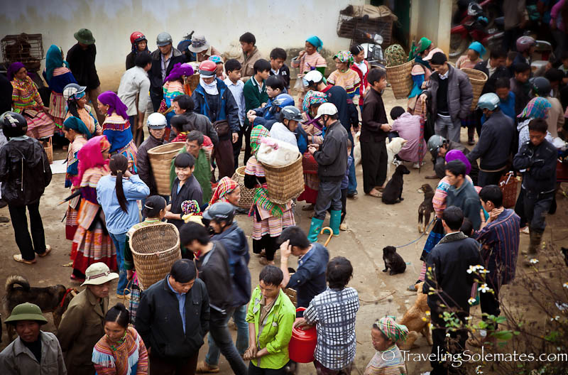 Animal Trading, Bac Cha, Market, Vietnam
