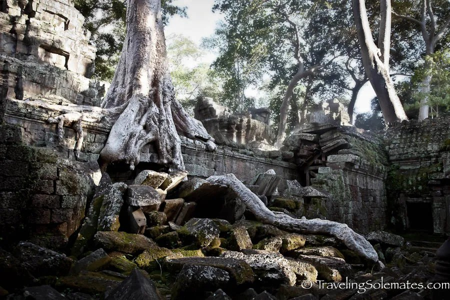 Giant Trees and Roots in Ta Phrom Temple, Angkor, Cambodia