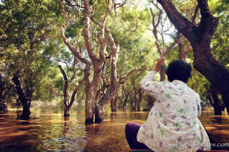 Flooded Forest, Kompong Pluk, Tonle Sap, Cambodia