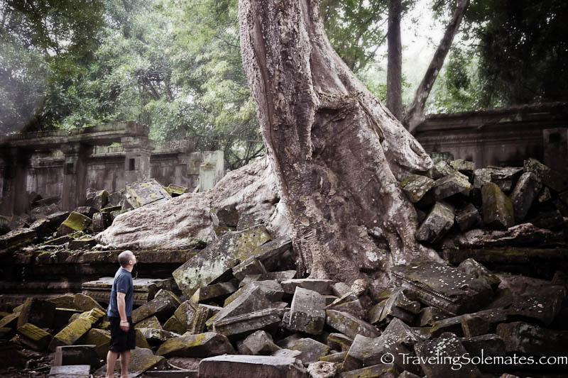 Rubles and Trees in Beng Mealea, Cambodia