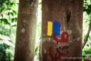 Trailblazer, Waitakabuli Trail, Segment 6, Kalinago Territory, Dominica