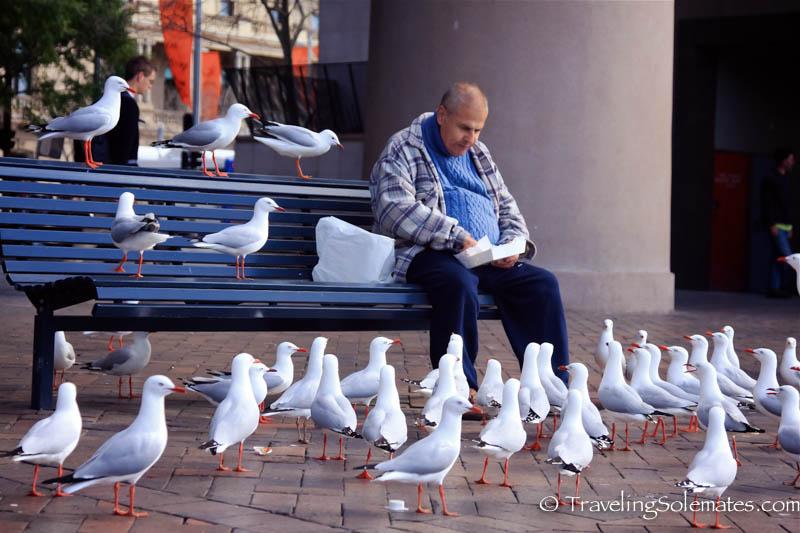 Birds at Circular Quay, Sydney, Australia