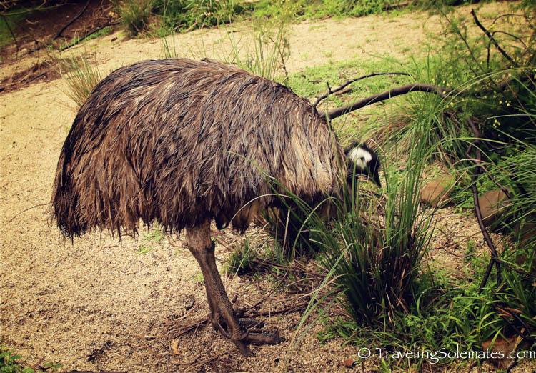 Healesville Sanctuary, Yarra Valley, Victoria, Australia