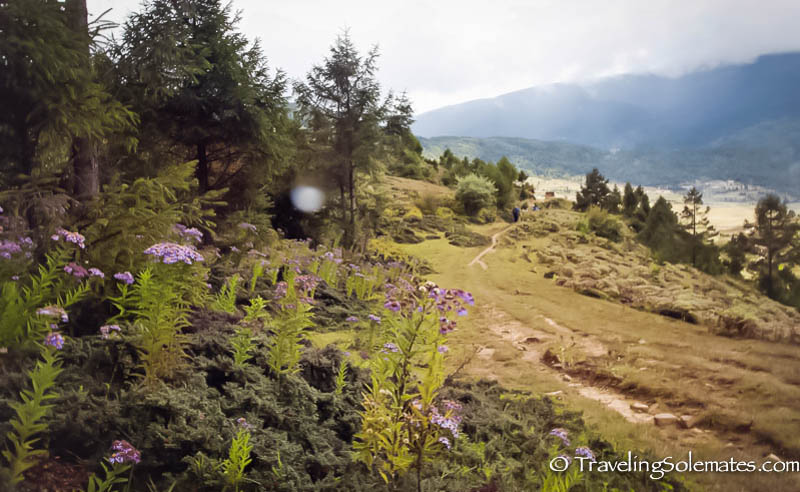 Wild Flowers along the Hiking Trail in Ura Valley, Bumthang, Bhutan