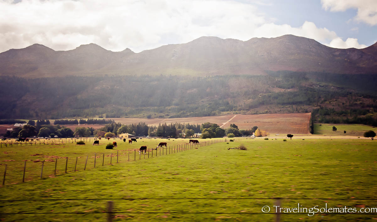 Farm in the Winelands, Paarl, South Africa