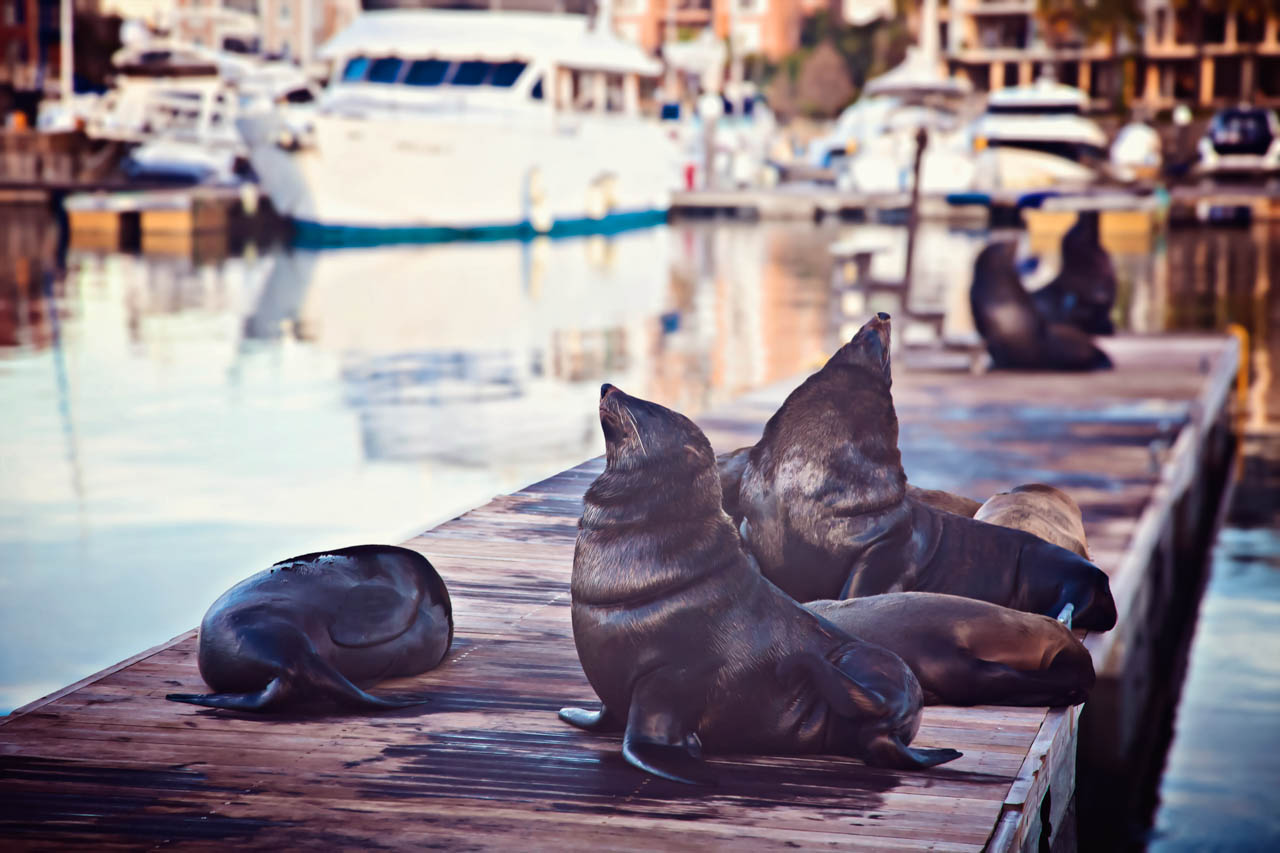 Seals in Marina, Cape Town, South Africa