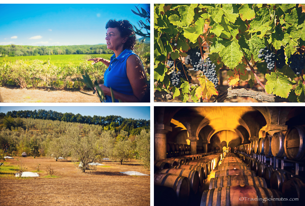 Podere Gaudo el Melo Winery, Blogheri, Tuscany, Italy