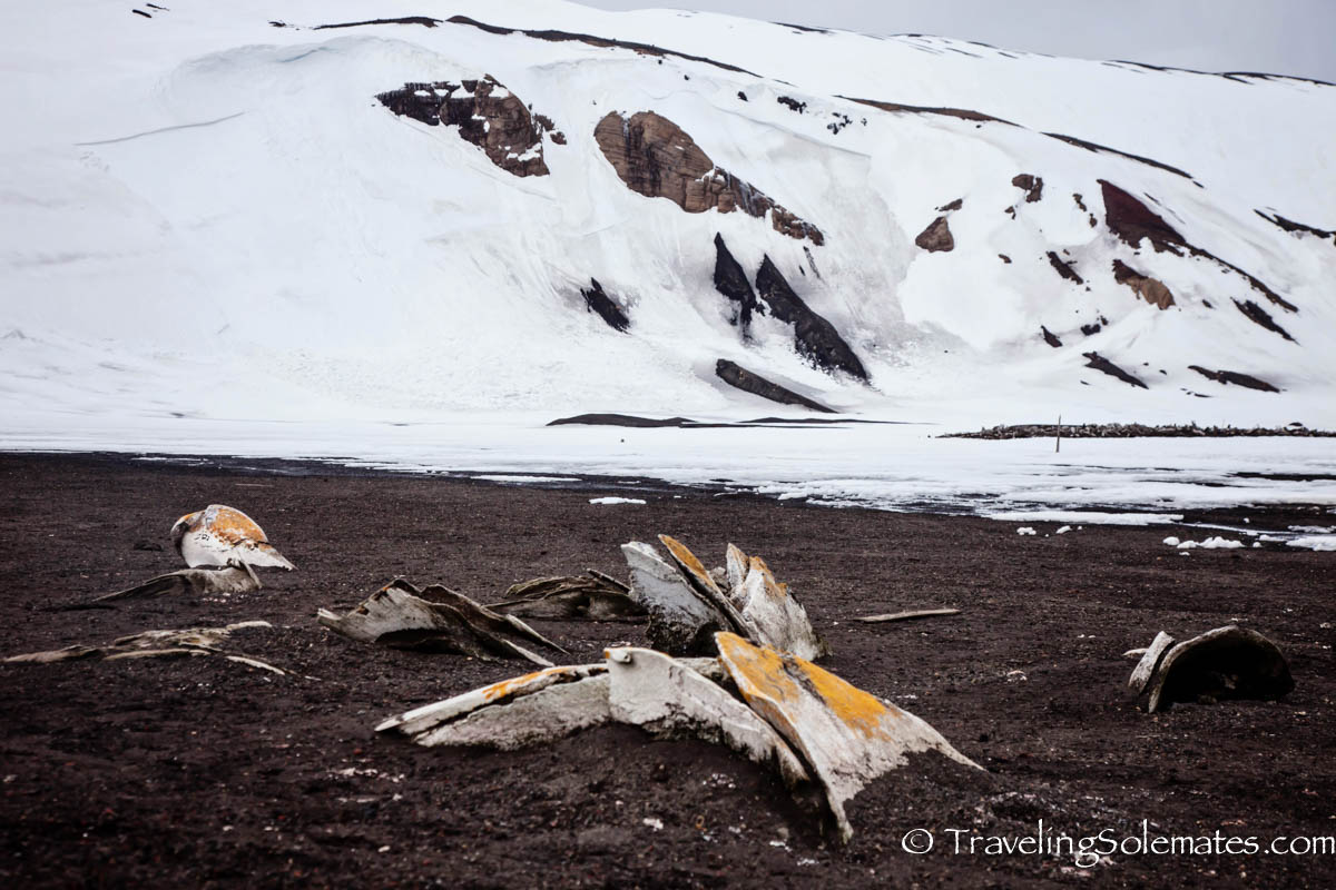 Whale Bones, Whaler's Bay, Deception Island, National Geographic Explorer, Antarctica Expedition, Lindblad Expeditions