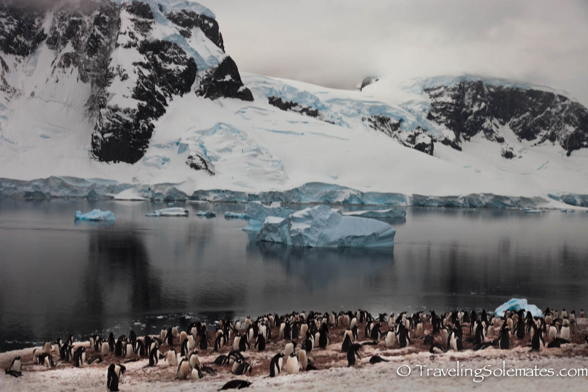 enguin Colony in Danco Island, Antarctica, National Geographic Explorer, Linblad Expeditions