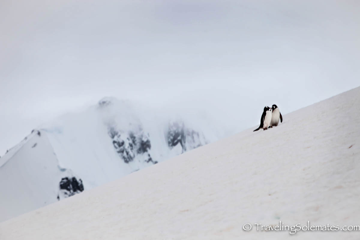 Penguins in Danco Island, Antarctica, National Geographic Explorer, Linblad ExpeditionsPenguins in Danco Island, Antarctica, National Geographic Explorer, Linblad Expeditions