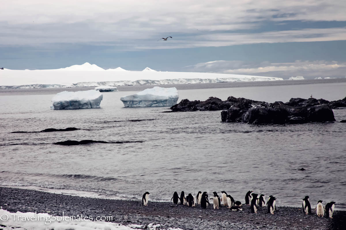 Penguins on the beach in Brown Bluff, Antartica, National Geographic Explorer, Lindblad Expeditions