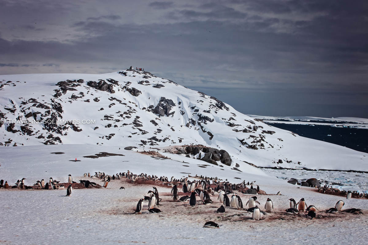 Penguins in Booth Island, Antarctica
