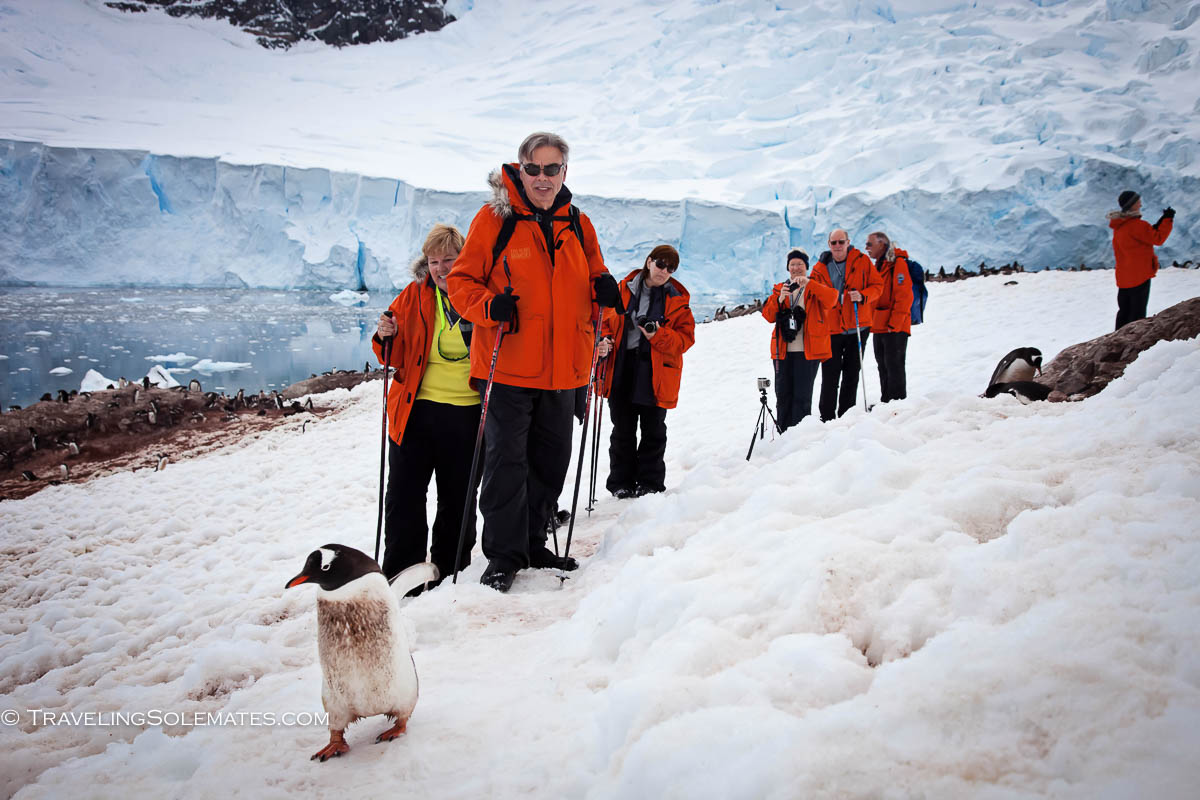 Gentoo Penguins, Hiking in Neko Harbor Mountains, Antarctica, National Geographic Explorer Lindblad Expeditions