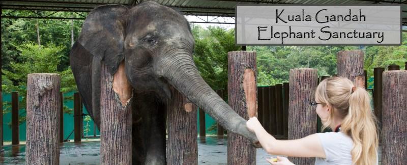 Kuala Gandah Elephant Sanctuary B