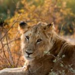 Travel Deal:  African Safari at Value Luxury Price