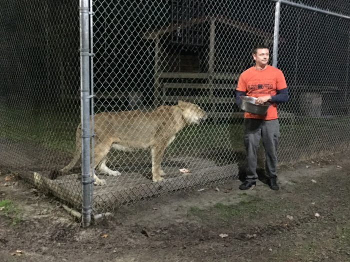 Feeding the big cats at Catty Shack Ranch Wildlife Sanctuary