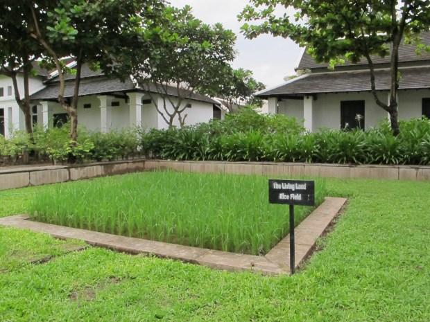 Hotel de la Paix courtyard rice paddy