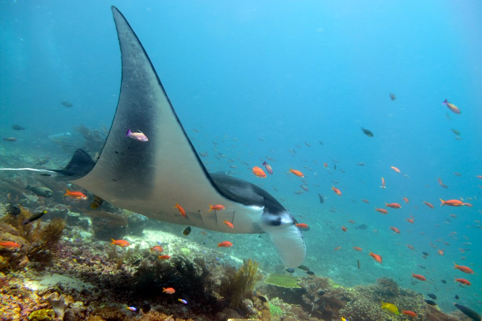 5 Responsible Ways to Snorkel with Mantas
