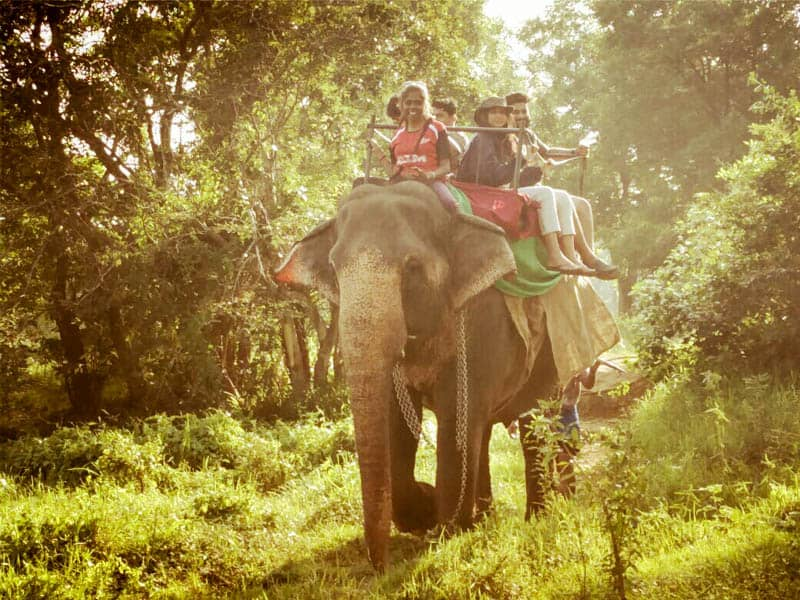Elephant ride in Sigiriya