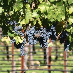 New in Napa Valley