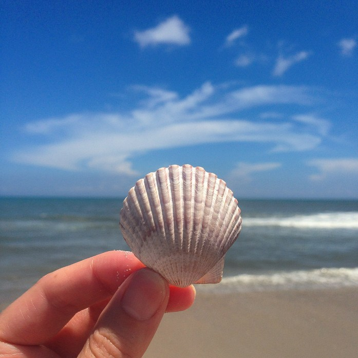 things-to-do-in-the-outer-banks-hatteras-beach-shell