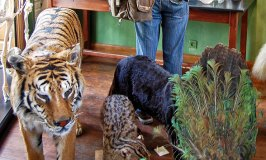 Deyrolle Taxidermist