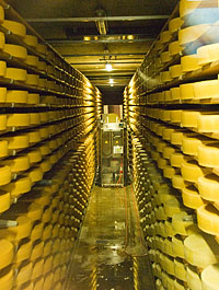 Gruyere cheese maturing, note cheese-turning machine