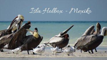 isla-holbox-titel