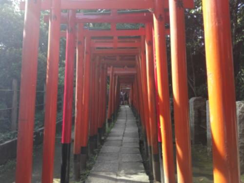 A torii gate path