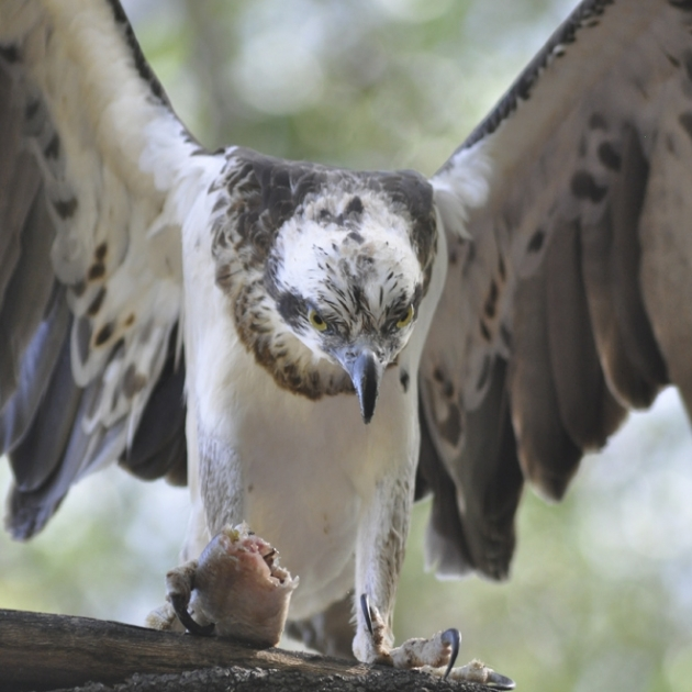 Northern Territory birdlife
