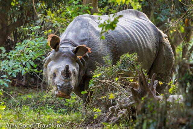 Travel Photography - Wildlife