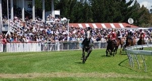 New zealand horse racing festivals