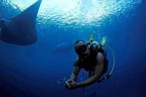 Palau diving with manta rays