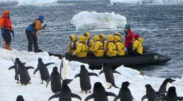 Greeted by Adelie penguins. Photo Credit: Deborah Stone