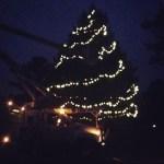 O, Christmas tree.