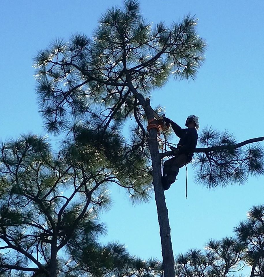 Marvellous Tree Trimming Tree Services Out On A Limb Tree Removal Trimming Out On A Limb Tree Service St Marys Pa Out On A Limb Tree Service N Island houzz 01 Out On A Limb Tree Service