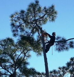 Small Of Out On A Limb Tree Service