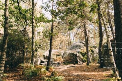 oct-tm-2560x1440-forest