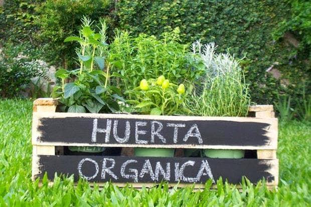 Se realizará un taller de huerta orgánica en Berutti